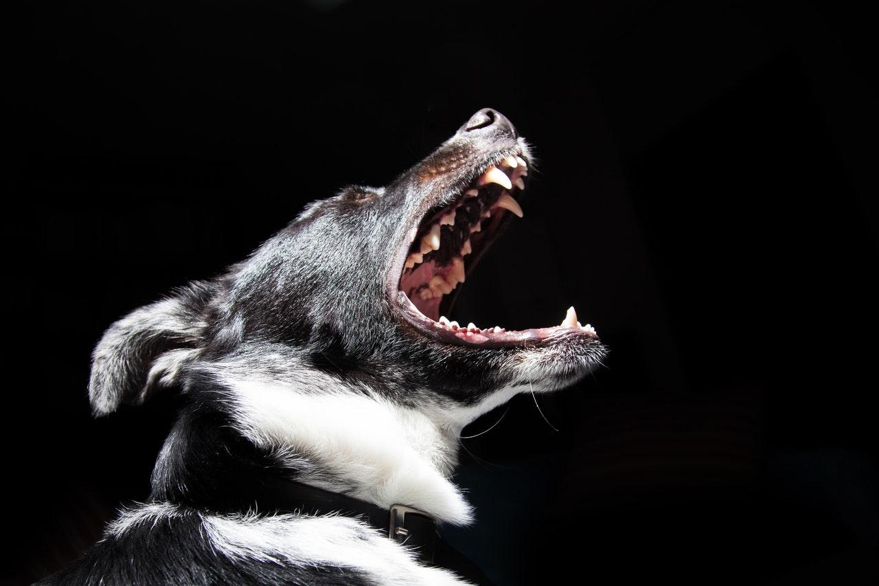 chien mordre