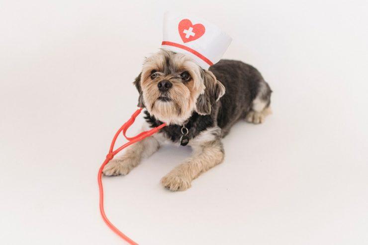 RC pro vétérinaire