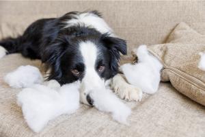 chien destructeur noir et blanc